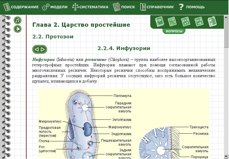 Лабораторная Работа По Биологии 7 Класс Строение Инфузории Туфельки