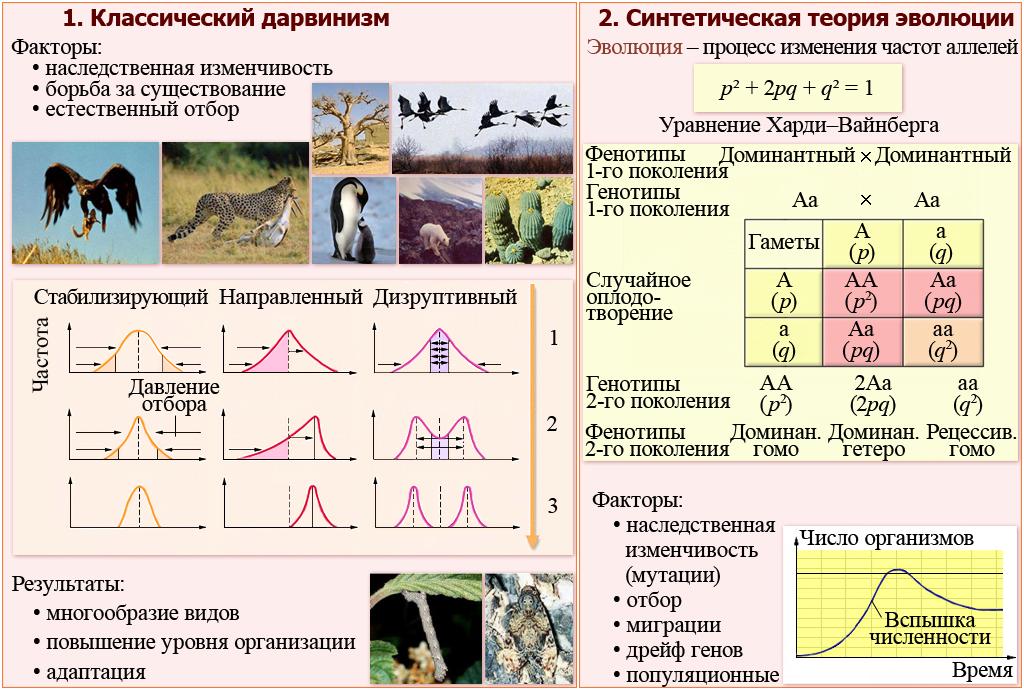конспект урока по биологии - тип простейшие